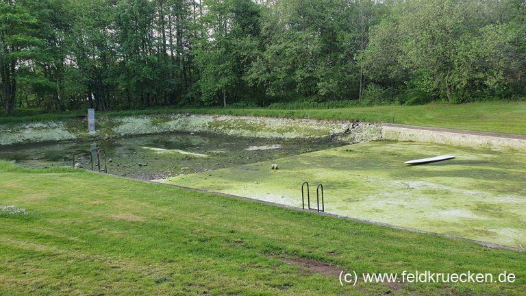 Algen im Brandlöschteich Feldkrücken