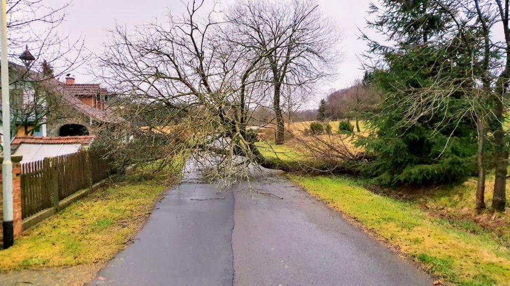 Umgestürzter Baum durch Sturmtief Sabine